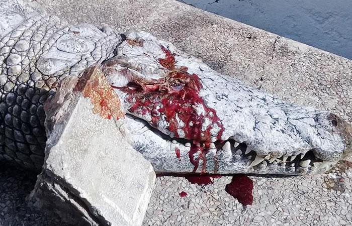 Túnez: Cocodrilo muere tras fuerte ataque