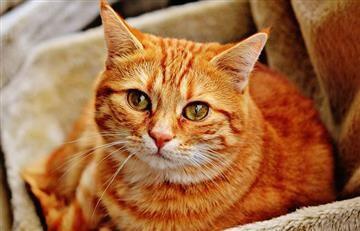 Antioquia: Condenan a hombre que mataba gatos para comérselos