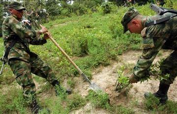 Acuerdo de paz con las Farc provocó el aumento de cultivo de coca