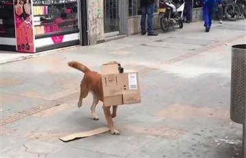 Instagram: Perro reciclador enseña a los capitalinos a cuidar las calles