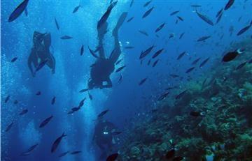 Mediterráneo ha perdido un gran porcentaje de sus peces y focas