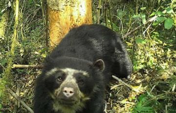 Asesinan a un oso andino cerca al Parque Nacional Natural Chingaza