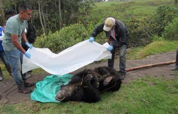 Ofrecen $15 millones de recompensa por datos del crimen del oso andino