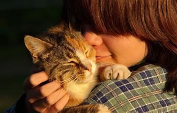 Los gatos se están convirtiendo en el mejor amigo del hombre