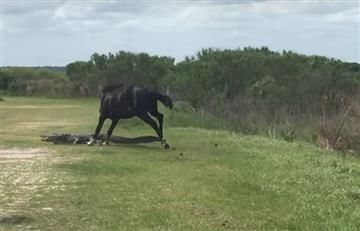 Viral: Así defendió un caballo a su manada de un caimán