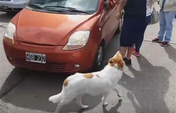 YouTube: Familia intenta abandonar a un perrita y esto les sucede