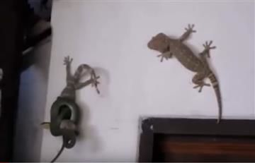 Viral: Batalla entre una serpiente y un lagarto estalla la red