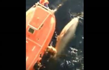 YouTube: Arriesgado rescate de un marinero a una ballena