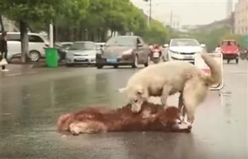 YouTube: Perro intenta reanimar a su amigo y conmueve las redes