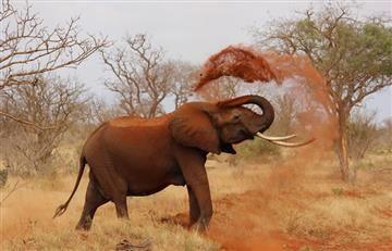 YouTube: ¿Qué significa soñar con un elefante?