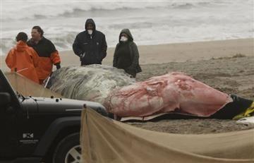 EEUU: Alerta por inexplicables muertes de ballenas jorobadas