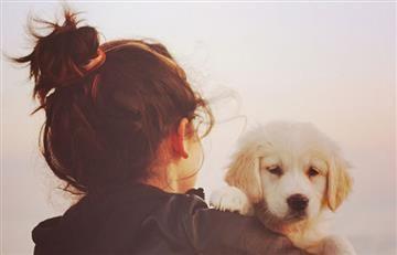 ¿Cómo desarrollar la inteligencia de un perro?