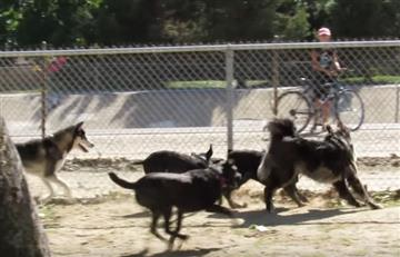 Viral: Ardilla visita una manada de perros y lo lamenta