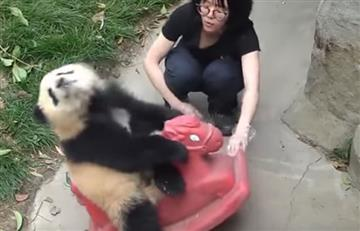 YouTube: Panda enternece la red con su 'paseo' a caballo
