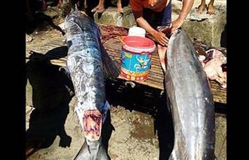 Filipinas: La realidad detrás del pez 'tatuado' que causó furor