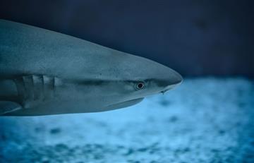 Viral: Buscan hombre que abrazó desnudo a un tiburón recién capturado