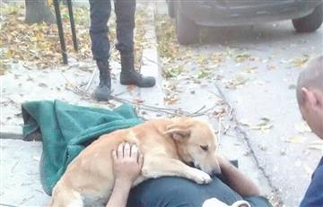 Viral: Perro se aferra a su dueño herido tras accidente