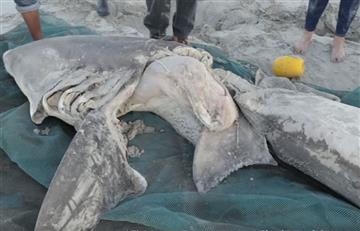 Sudáfrica: Reportan extraños casos de orcas matando tiburones