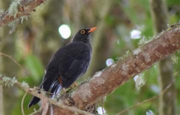 Colombia, campeón del Día Mundial de Avistamiento de Aves