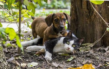 En Bogotá implantarán microchips a perros y gatos
