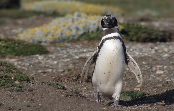 La Antártida se está volviendo verde ¿Cuál es la razón?