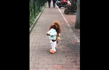 La triste historia de maltrato detrás de los perros que 'caminan en dos patas'