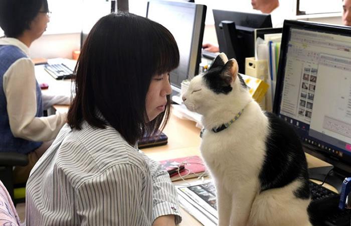 Los gatos, el remedio para combatir el estrés laboral