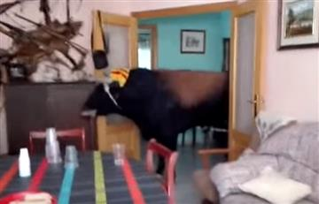 YouTube: Toro desató el pánico al entrar a una casa