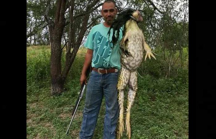 Texas: Cazador exhibe rana toro gigante ¿Es real?