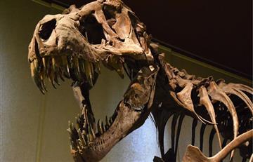 ¿El Tiranosaurio Rex tenía o no plumas?