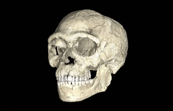 Homo sapiens. Foto: Youtube