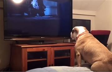 Viral: ¿Qué pasa cuando un perro ve una película de terror?