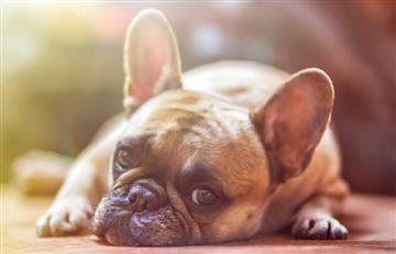 Los diez alimentos que pueden enfermar a tu perro