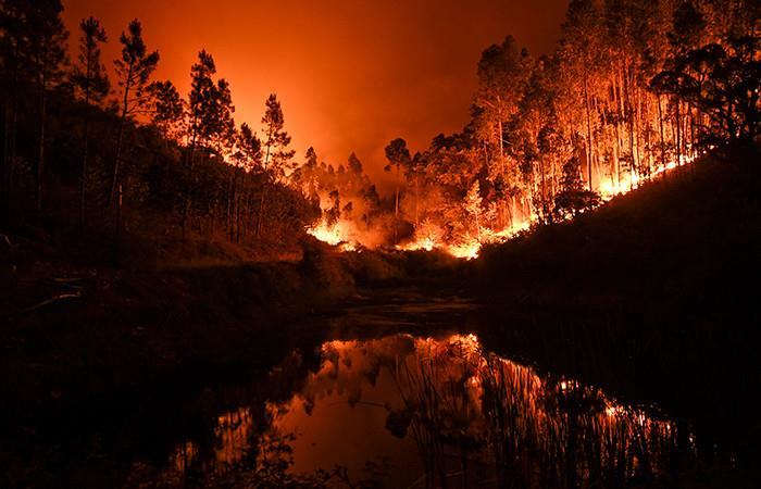 Portugal: Incendio forestal deja 62 muertos y más de 50 heridos