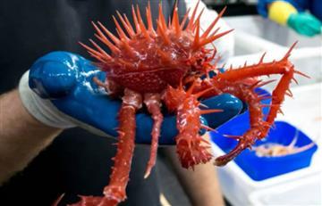 Australia: Las aterradoras especies marinas halladas en sus aguas