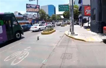 Twitter: Ciclista arriesgó su vida para salvar a un perro