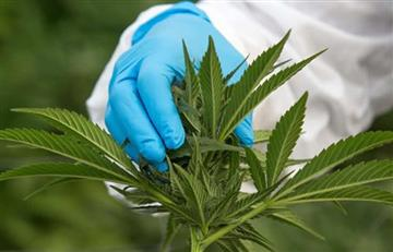 Universidad Nacional: ¿Cómo inscribirse al curso de cannabis?