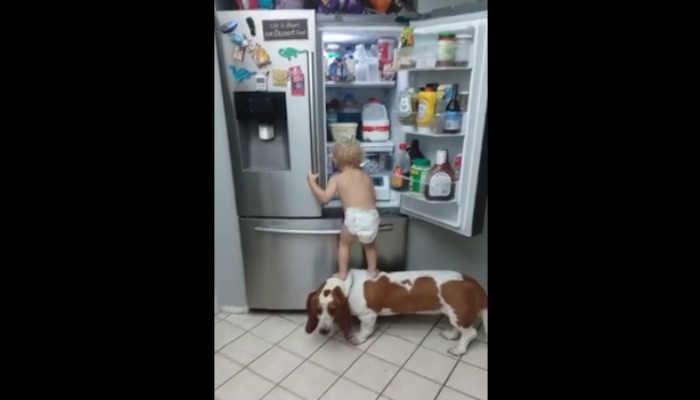 Facebook: Niño usa a su perro como escalera para subirse a la nevera