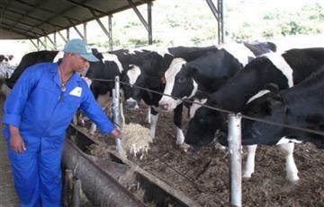 MinAgricultura: La fiebre aftosa no afecta la salud de las personas