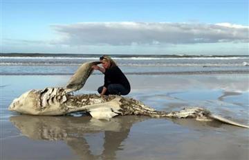 Sudáfrica: ¿Por qué están apareciendo tiburones desmembrados?