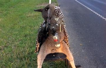 Australia: Hallan un canguro abatido y atado a una silla
