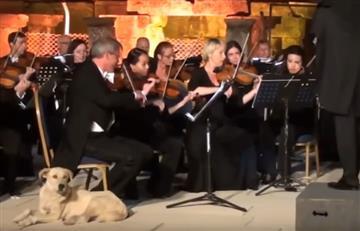 Turquía: Perro melómano es la nueva estrella de las redes sociales