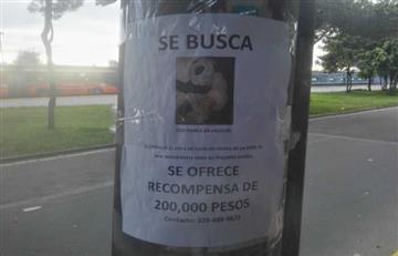 Bogotá: Ofrecen recompensa de $200 mil por hallar un oso de peluche
