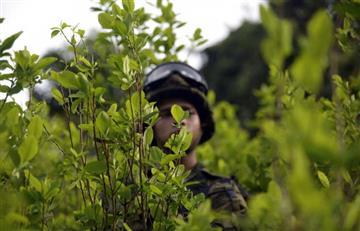 Colombia aumentó un 34 % la producción de coca entre 2015 y 2016
