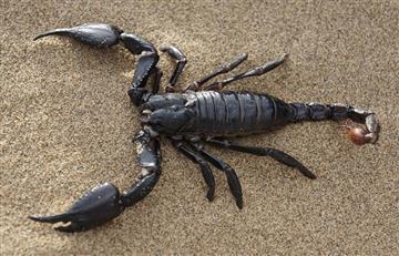 ¿Qué significa soñar con escorpiones o alacranes?