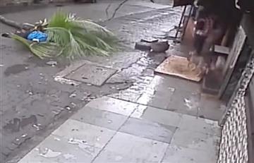 India: Presentadora muere luego de ser aplastada por una palmera