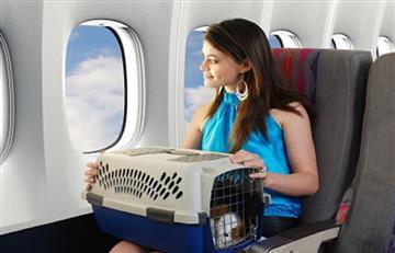 Viajar en avión con tu mascota: ¿Cuánto cuesta?