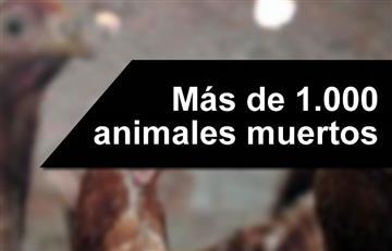 Hallan más de 1.000 animales muertos en Los Ángeles