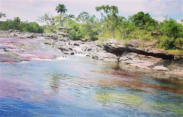 Por proteger Caño Cristales, compañía estadounidense demanda a Colombia