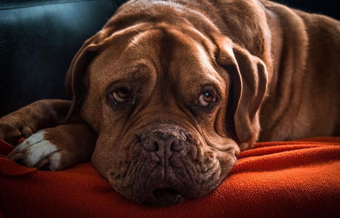 Seis actividades para un perro en la etapa de vejez